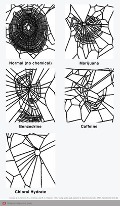 Spider web diagram