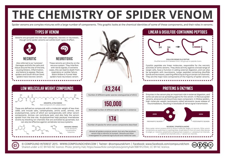 Chemistry of spider venom