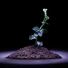 Plant science