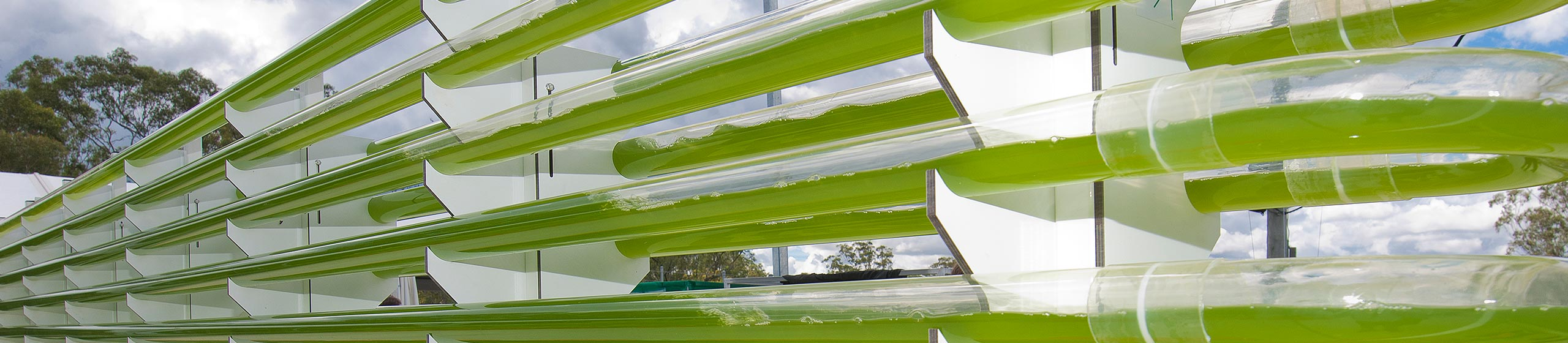 Photobioreactor at Centre for Solar Biotechnology Facility
