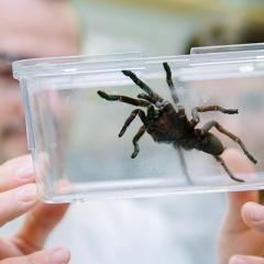 Spider venom stroke treatment slows damage to the brain