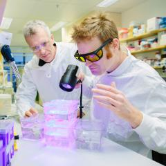 Professor Rob Parton and Dr Thomas Hall are finding insights into muscle diseases by studying zebrafish