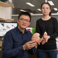 Profesor Jian Yang and Dr Ting Qi