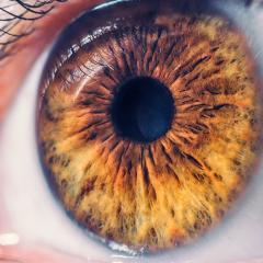 The genes of the retina have been mapped as part of the Human Cell Atlas Project.
