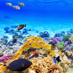 Sequencing the Great Barrier Reef